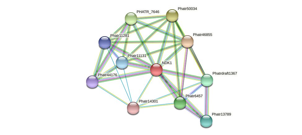 NDK1 protein (Phaeodactylum tricornutum) - STRING interaction network