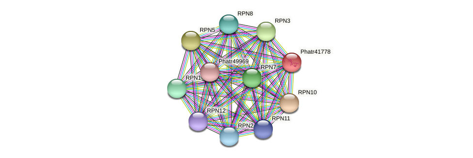 Phatr41778 protein (Phaeodactylum tricornutum) - STRING interaction network