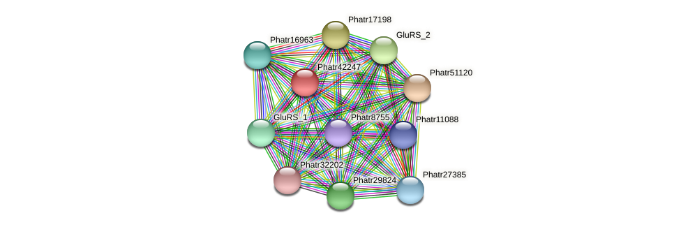 Phatr42247 protein (Phaeodactylum tricornutum) - STRING interaction network