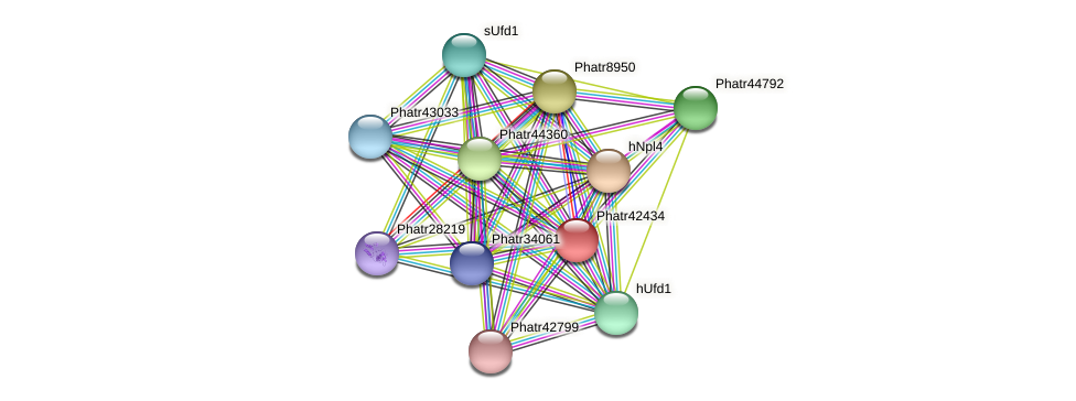 Phatr42434 protein (Phaeodactylum tricornutum) - STRING interaction network