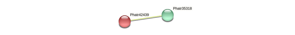 Phatr42439 protein (Phaeodactylum tricornutum) - STRING interaction network