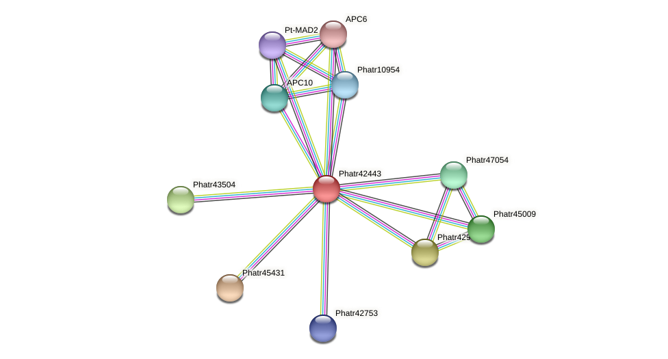 Phatr42443 protein (Phaeodactylum tricornutum) - STRING interaction network