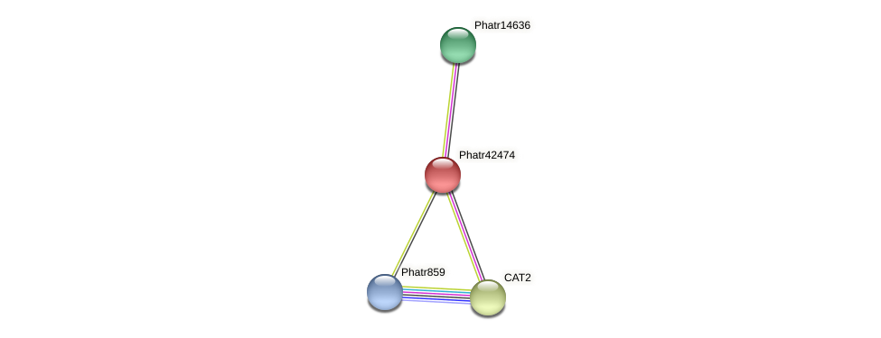 Phatr42474 protein (Phaeodactylum tricornutum) - STRING interaction network