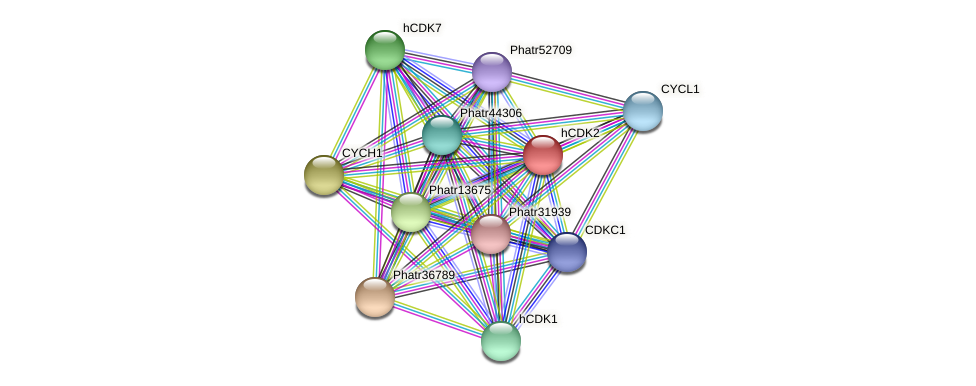 hCDK2 protein (Phaeodactylum tricornutum) - STRING interaction network