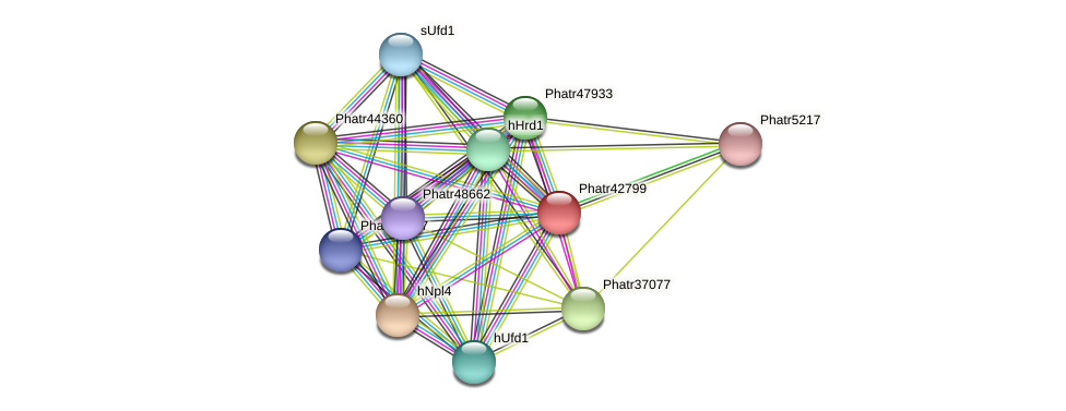 Phatr42799 protein (Phaeodactylum tricornutum) - STRING interaction network