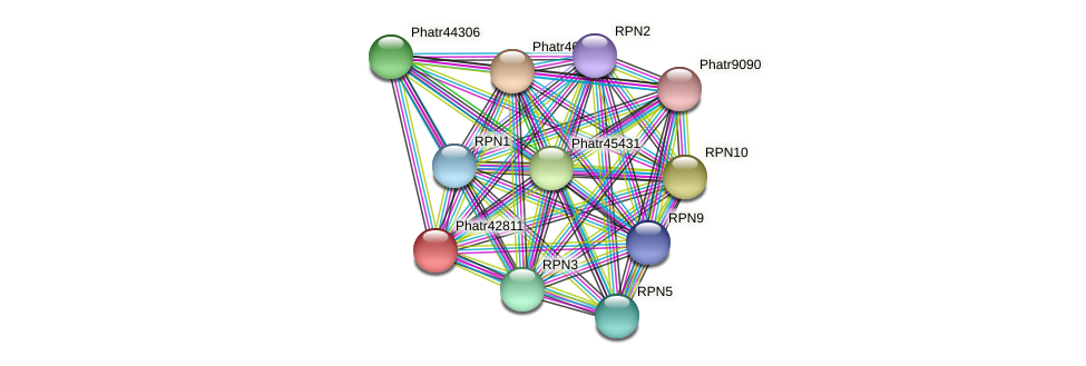 Phatr42811 protein (Phaeodactylum tricornutum) - STRING interaction network