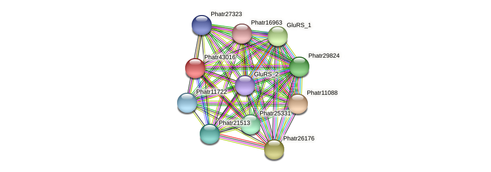 Phatr43016 protein (Phaeodactylum tricornutum) - STRING interaction network