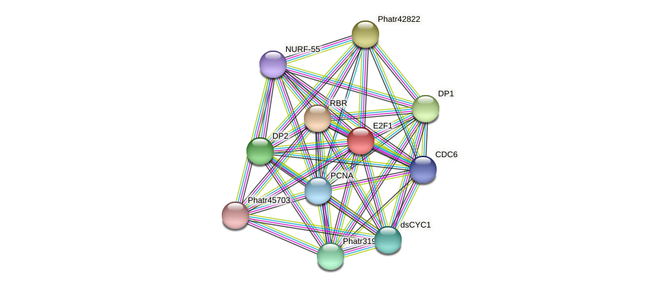 E2F1 protein (Phaeodactylum tricornutum) - STRING interaction network