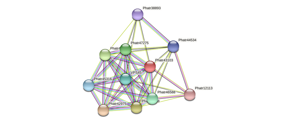 Phatr43103 protein (Phaeodactylum tricornutum) - STRING interaction network