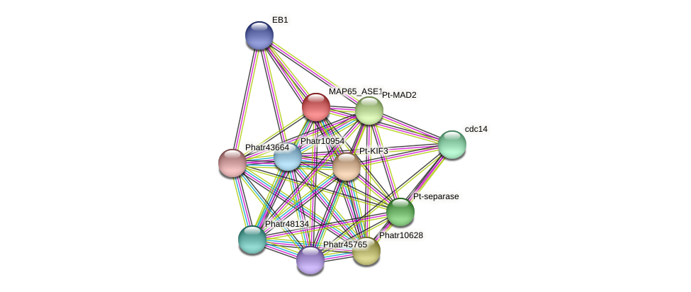 Phatr43122 protein (Phaeodactylum tricornutum) - STRING interaction network