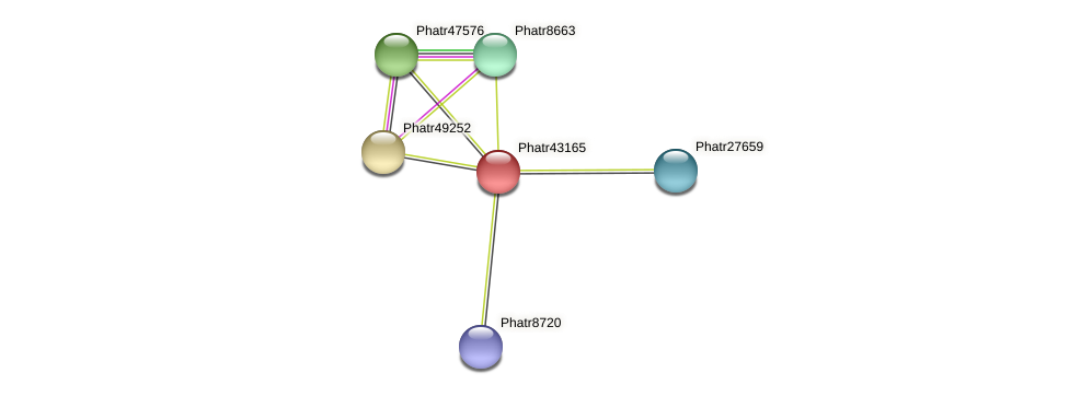 Phatr43165 protein (Phaeodactylum tricornutum) - STRING interaction network