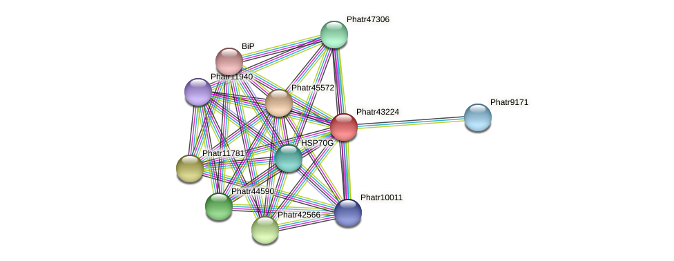 Phatr43224 protein (Phaeodactylum tricornutum) - STRING interaction network