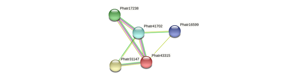 Phatr43315 protein (Phaeodactylum tricornutum) - STRING interaction network