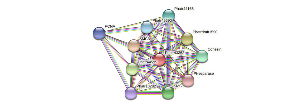 Phatr43362 protein (Phaeodactylum tricornutum) - STRING interaction network