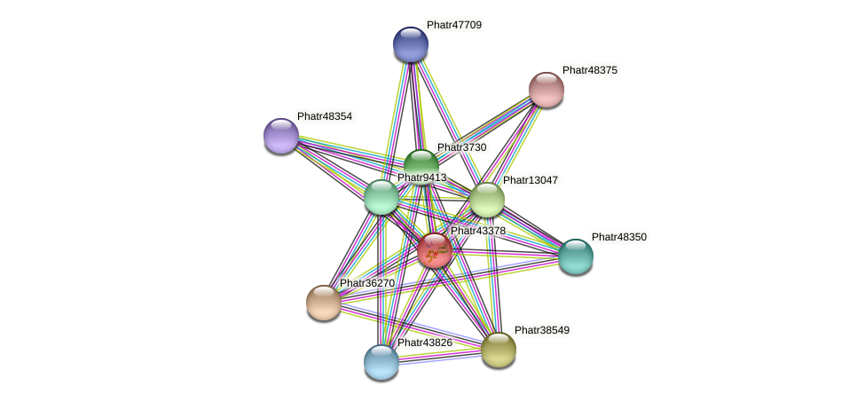 Phatr43378 protein (Phaeodactylum tricornutum) - STRING interaction network