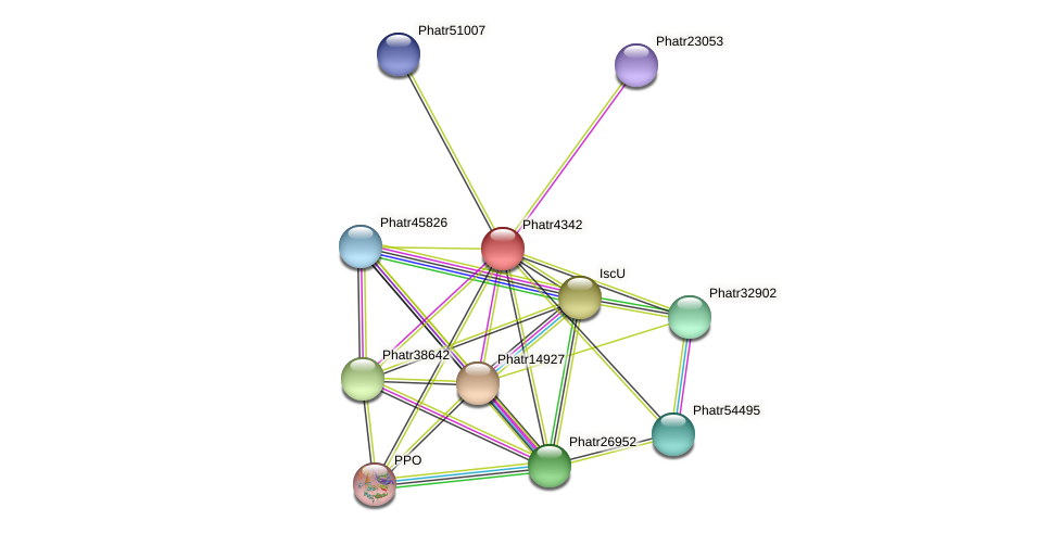 Phatr4342 protein (Phaeodactylum tricornutum) - STRING interaction network
