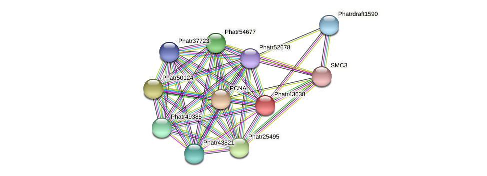 Phatr43638 protein (Phaeodactylum tricornutum) - STRING interaction network