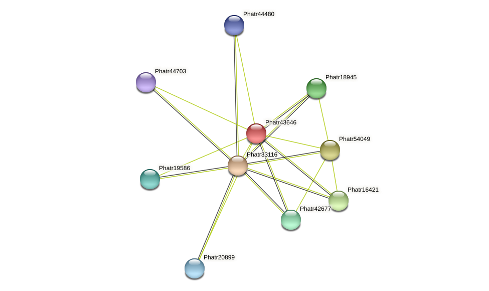 Phatr43646 protein (Phaeodactylum tricornutum) - STRING interaction network