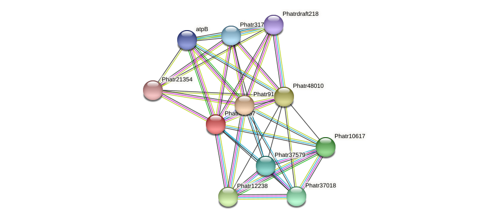 Phatr43657 protein (Phaeodactylum tricornutum) - STRING interaction network