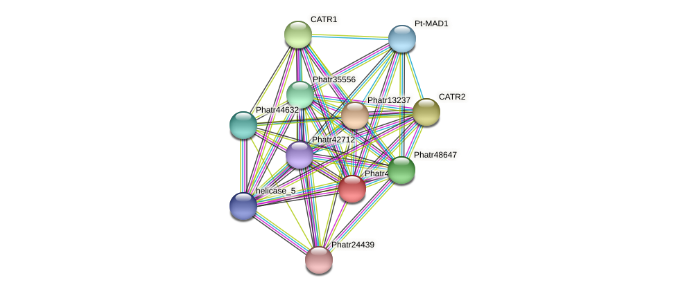 Phatr43680 protein (Phaeodactylum tricornutum) - STRING interaction network