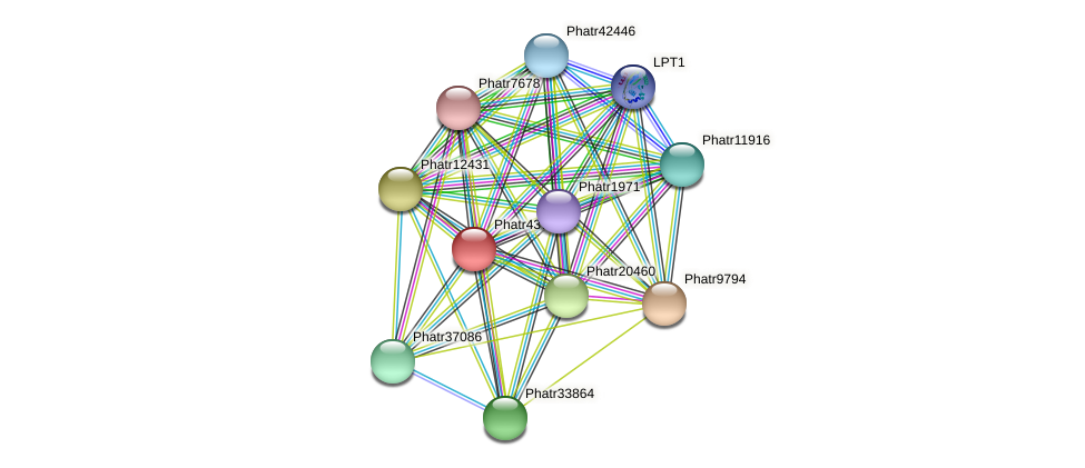Phatr43773 protein (Phaeodactylum tricornutum) - STRING interaction network