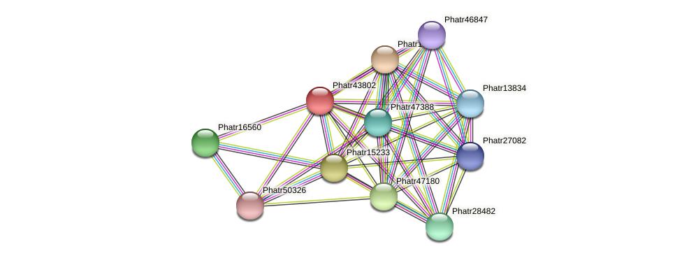 Phatr43802 protein (Phaeodactylum tricornutum) - STRING interaction network
