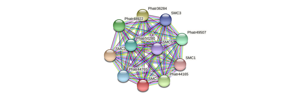 SMC protein (Phaeodactylum tricornutum) - STRING interaction network