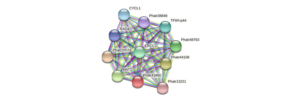 Phatr43960 protein (Phaeodactylum tricornutum) - STRING interaction network