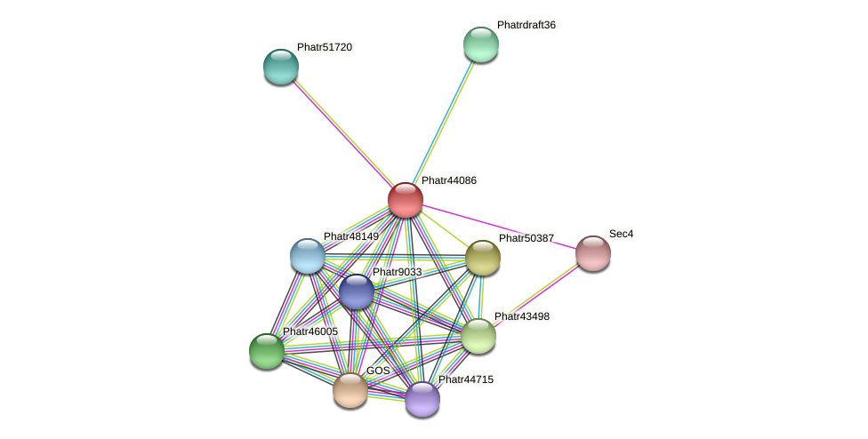 Phatr44086 protein (Phaeodactylum tricornutum) - STRING interaction network