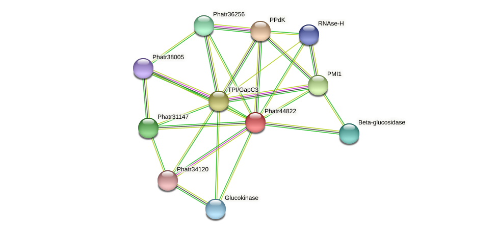 Phatr44822 protein (Phaeodactylum tricornutum) - STRING interaction network