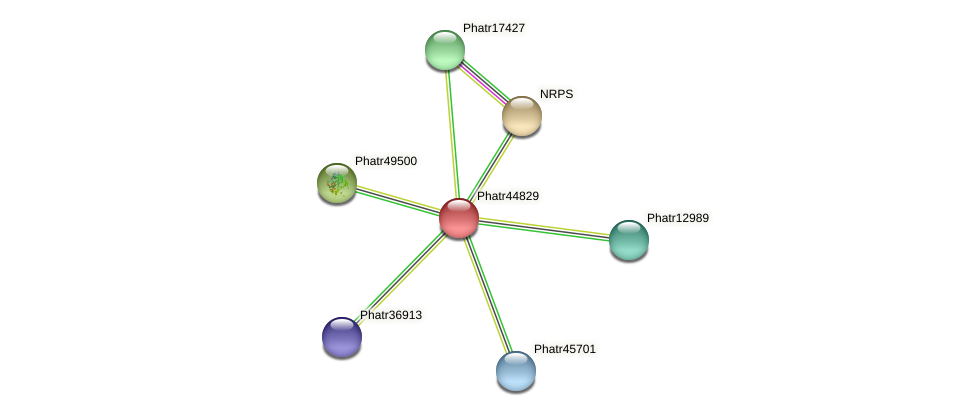 Phatr44829 protein (Phaeodactylum tricornutum) - STRING interaction network