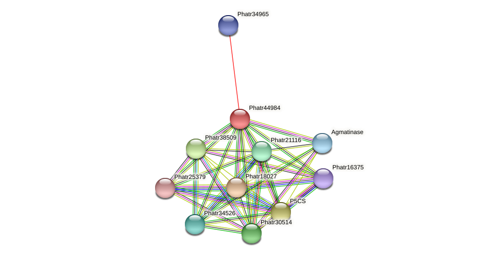 Phatr44984 protein (Phaeodactylum tricornutum) - STRING interaction network