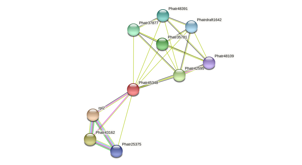 Phatr45348 protein (Phaeodactylum tricornutum) - STRING interaction network