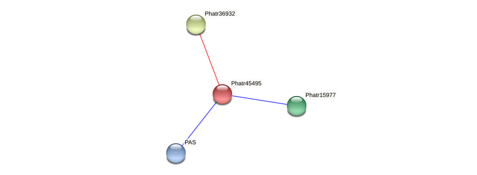 Phatr45495 protein (Phaeodactylum tricornutum) - STRING interaction network