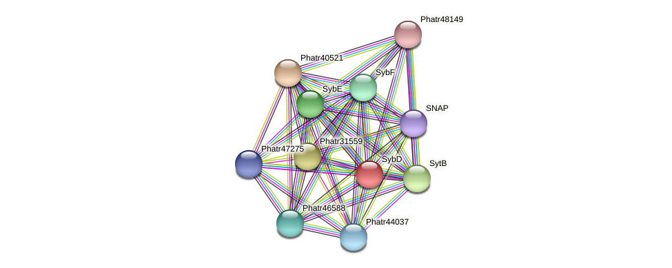 SybD protein (Phaeodactylum tricornutum) - STRING interaction network