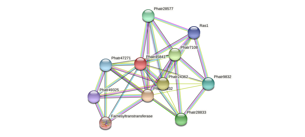 Phatr45841 protein (Phaeodactylum tricornutum) - STRING interaction network
