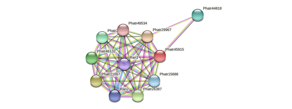 Phatr45915 protein (Phaeodactylum tricornutum) - STRING interaction network