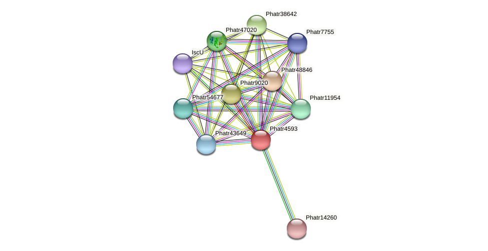 Phatr4593 protein (Phaeodactylum tricornutum) - STRING interaction network