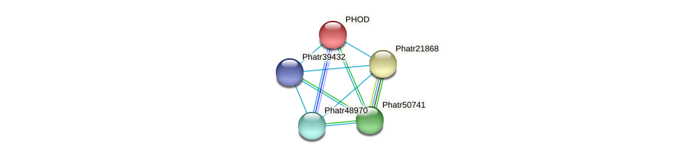PHOD protein (Phaeodactylum tricornutum) - STRING interaction network