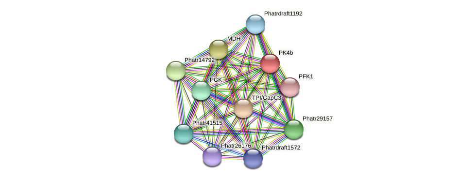 PK4b protein (Phaeodactylum tricornutum) - STRING interaction network
