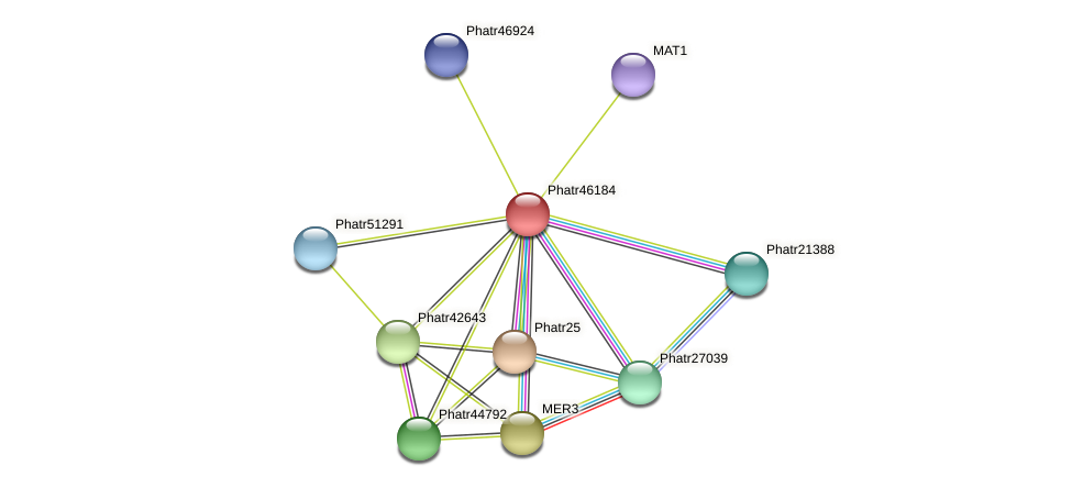 Phatr46184 protein (Phaeodactylum tricornutum) - STRING interaction network