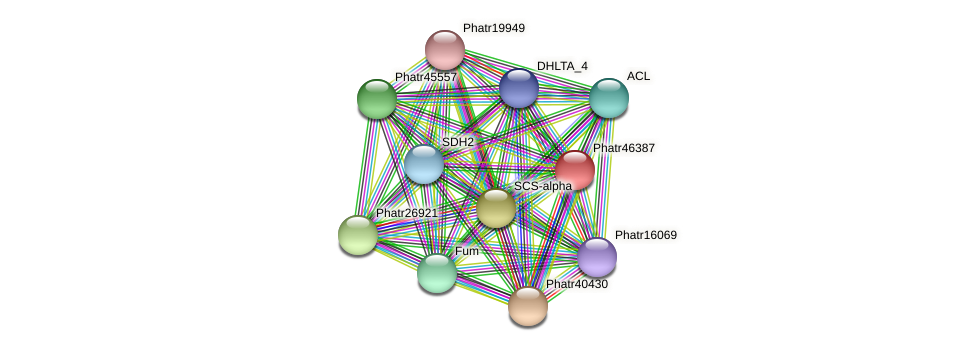Phatr46387 protein (Phaeodactylum tricornutum) - STRING interaction network