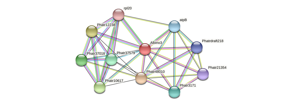 Albino3 protein (Phaeodactylum tricornutum) - STRING interaction network