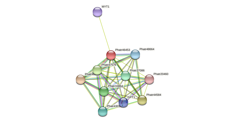 Phatr46453 protein (Phaeodactylum tricornutum) - STRING interaction network