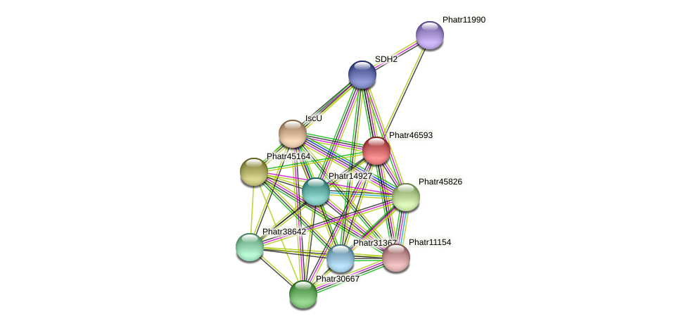 Phatr46593 protein (Phaeodactylum tricornutum) - STRING interaction network
