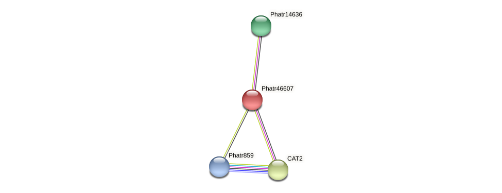 Phatr46607 protein (Phaeodactylum tricornutum) - STRING interaction network