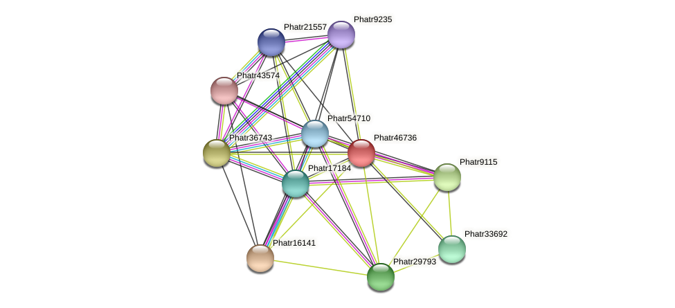 Phatr46736 protein (Phaeodactylum tricornutum) - STRING interaction network