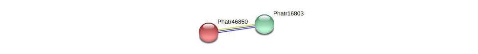 Phatr46850 protein (Phaeodactylum tricornutum) - STRING interaction network