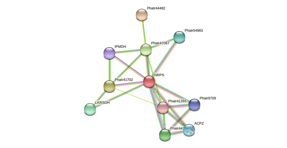 NRPS protein (Phaeodactylum tricornutum) - STRING interaction network