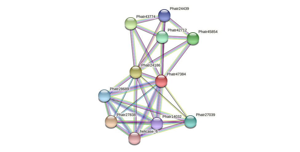 Phatr47384 protein (Phaeodactylum tricornutum) - STRING interaction network